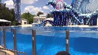 Alexander Kondrashov Все видео Лучшее в мире шоу с дельфинами.