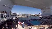 Alexander Kondrashov Все видео Русские в круизе. Круиз из Майами. Шикарный лайнер за $1000.