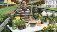 Дачные истории 1 сезон Работы в саду в конце апреля