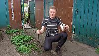KREOSAN Все видео Добыча червей на 220 вольт