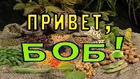 Российский гербарий Сезон 1 Привет, Боб!
