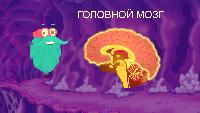 Шоу профессора Бинокса Сезон-1 Мозг человека
