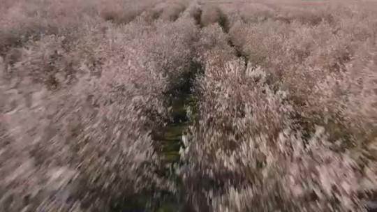 Трейлеры Сборник трейлеров Больше чем мед