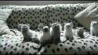 Улетное видео по-русски! 4 сезон 557 выпуск